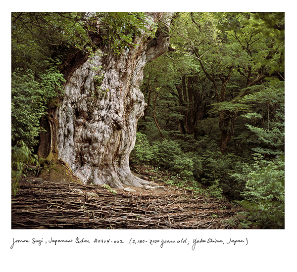 """The Oldest Living Things in the World"": juxtapoz_Rachel_Sussman8.jpg"