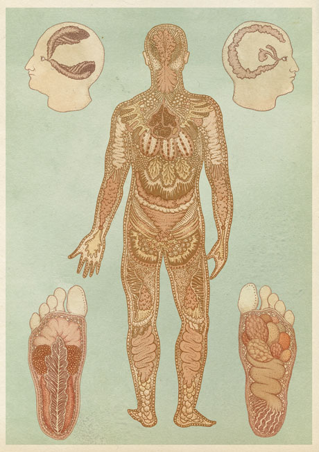 The Scientific and Anatomical Illustrations of Katie Scott: katie_scott_1_20111219_1034489620.jpg