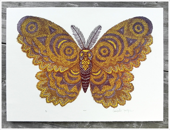 Gorgeous Woodblock Prints from The Tugboat Printshop: moth_main_770.jpg