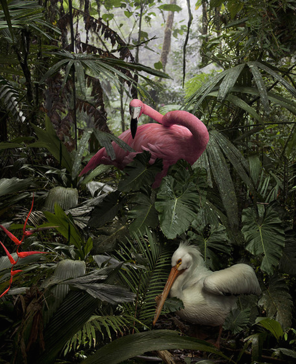 Lost Flamingos of the Cloud Forest: juxtapoz-pat-swain1.jpg