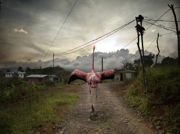 Lost Flamingos of the Cloud Forest: juxtapoz-pat-swain6.jpg