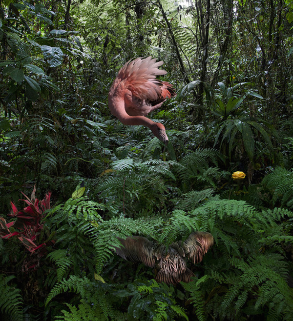Lost Flamingos of the Cloud Forest: juxtapoz-pat-swain8.jpg