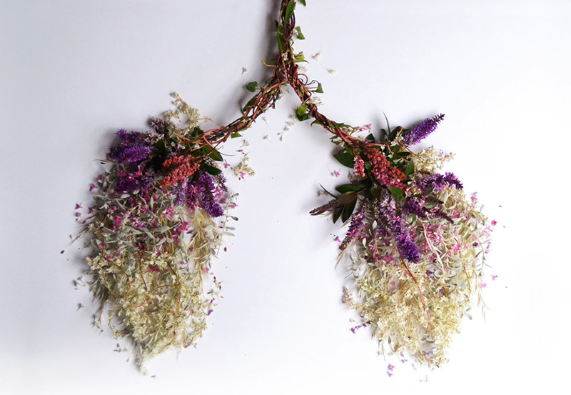 Eye Heart Spleen: Human Organs Made from Plants by Camila Carlow: eye-1.jpg