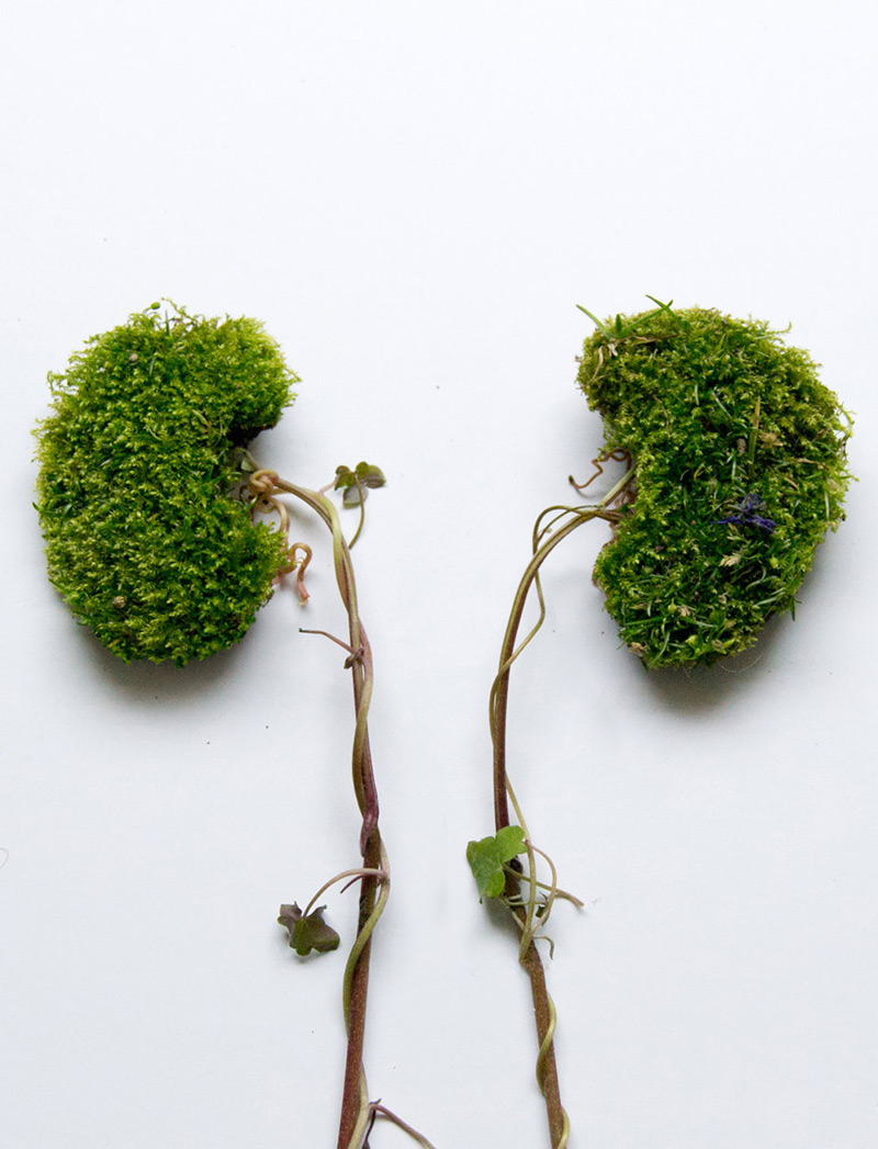 Eye Heart Spleen: Human Organs Made from Plants by Camila Carlow: eye-2.jpg