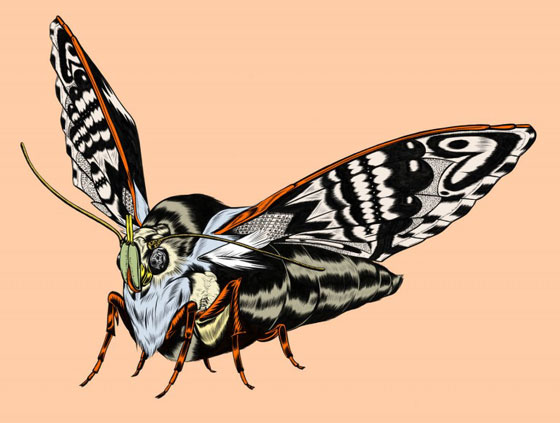 Kelsey Dake's Illustrated Objects: Moth_F-768x580.jpg