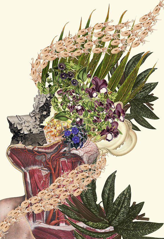 Travis Bedel's Anatomical Organics: collage-3.jpg