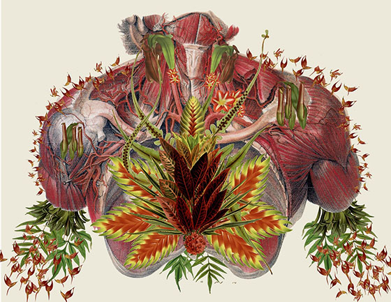 Travis Bedel's Anatomical Organics: collage-4.jpg