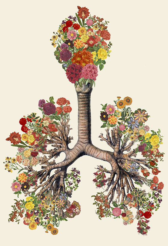 Travis Bedel's Anatomical Organics: collage-6.jpg