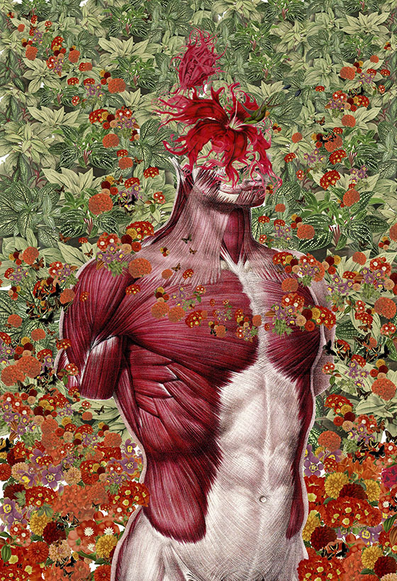 Travis Bedel's Anatomical Organics: collage-7.jpg