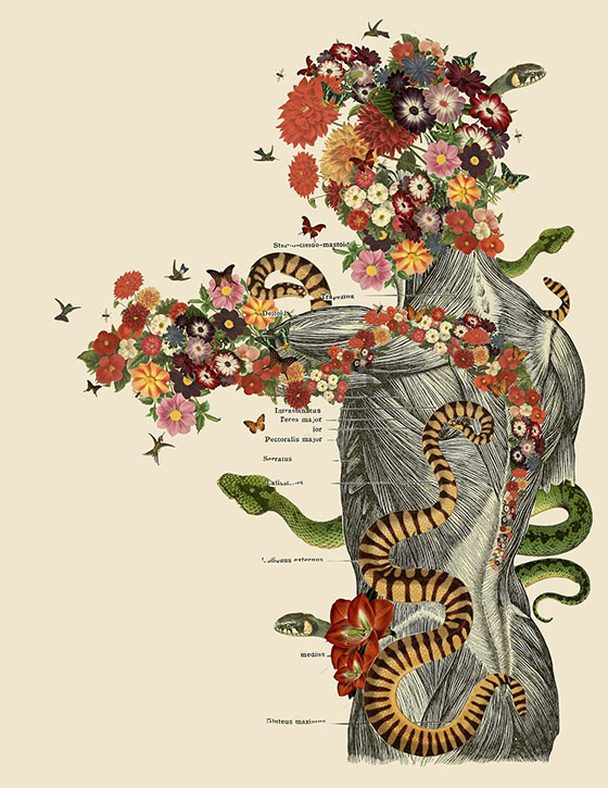Travis Bedel's Anatomical Organics: collage-8.jpg