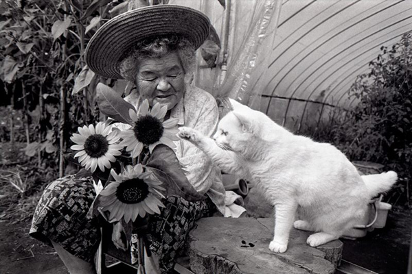 Miyoko Ihara: Misao the Big Mama and Fukumaru the Cat: jux-miyoko-ihara-4.jpg