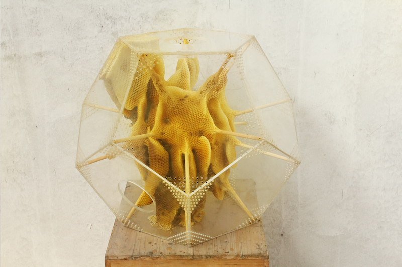 Ren Ri Sculpts with Bees: Ren_Ri_Beeswax_Sculptures_01.jpg