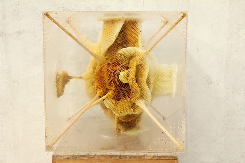 Ren Ri Sculpts with Bees: Ren_Ri_Beeswax_Sculptures_03.jpg