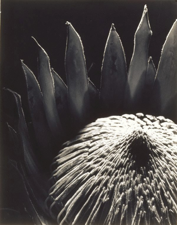 The work of Max Dupain: jux-max_dupain-1.jpg