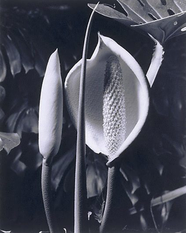 The work of Max Dupain: jux-max_dupain-7.jpg