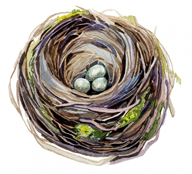 The Vibrant Watercolor Works of Holly Exley: blackbird-nest_800_2x-650x588.jpg