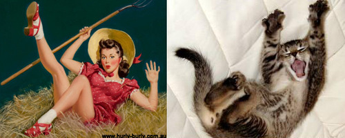 Cats That Look Like Pinup Girls: Juxtapoz-CatsPinUp006.jpg
