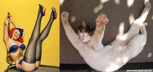 Cats That Look Like Pinup Girls: Juxtapoz-CatsPinUp011.jpg
