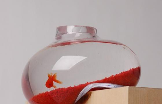 The Distorted Aquarium by Psalt Design
