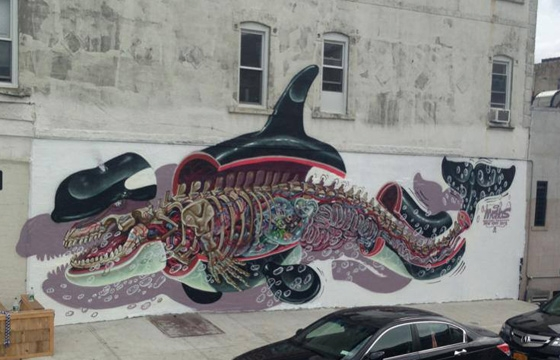 Dissected Orca by Nychos in Brooklyn