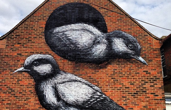 Roa in Chichester, UK