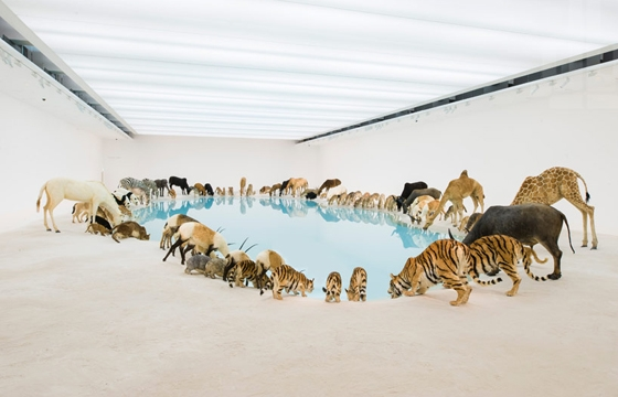 "Cai Guo Qiang's ""Falling Back to Earth"" @ Queensland GOMA"