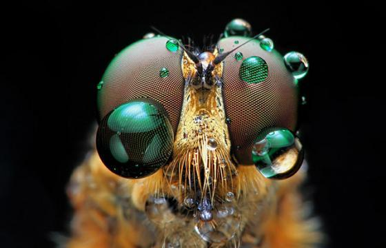 INSECTS In Your Face: Photography by Shikhei Goh