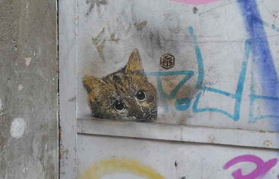 Curious cat by C215