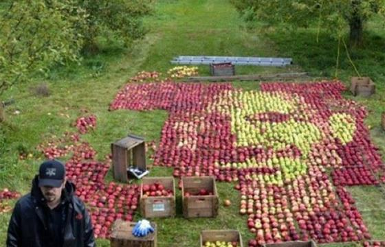 3750 Apples, One Portrait of Steve Jobs