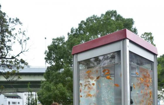 Goldfish Phone Booth Aquariums in Japan