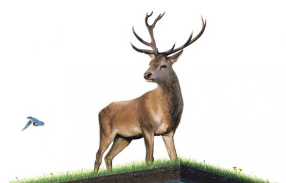"Josh Keyes ""Above and Below"" @ Joseph Gross Gallery, Tucson"