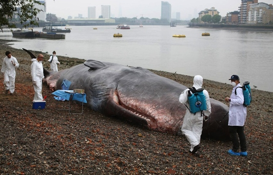 Hyperreal Beached Whale in London