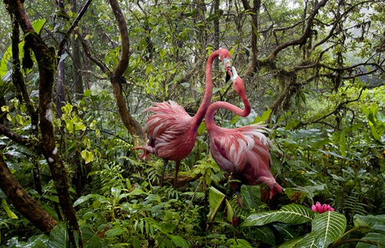Lost Flamingos of the Cloud Forest