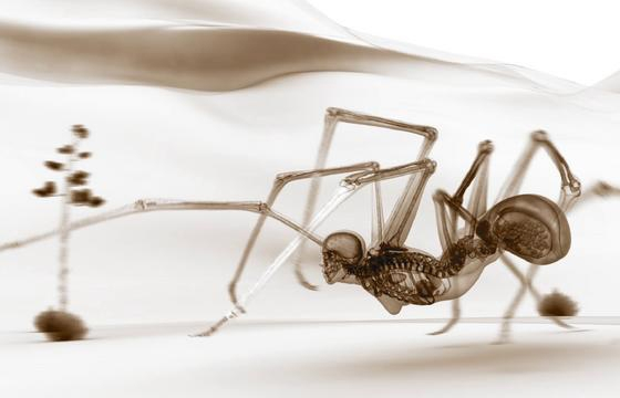 Brian Andrews Animates Insects with Human Skeletons
