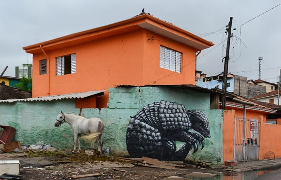 A horse and armadillo in San paulo