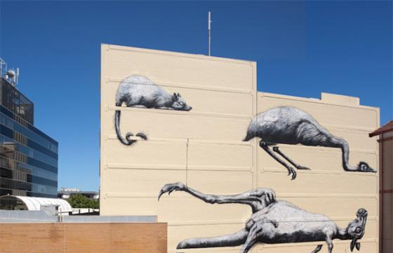 Roa in Perth