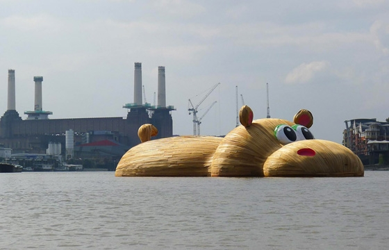 Giant Hippopotamus Floats Down River Thames