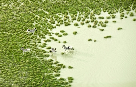 Zack Seckler's Aerial Abstracts of Botswana Wildlife