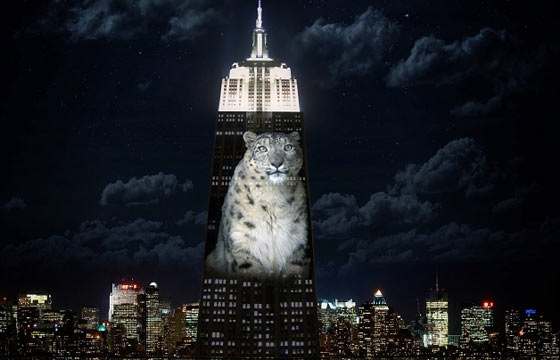 Empire State Building Turned Into Light Show for Endangered animals