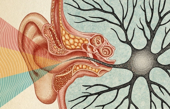 The Scientific and Anatomical Illustrations of Katie Scott