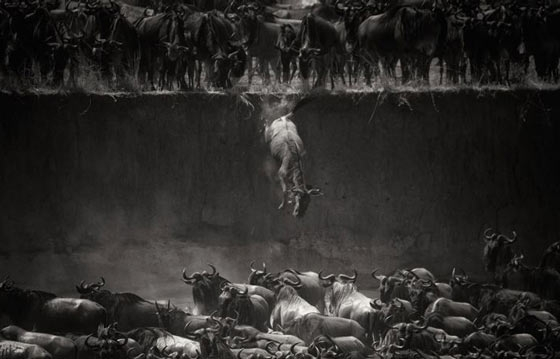 The Winners of the 2014 National Geographic Photo Contest