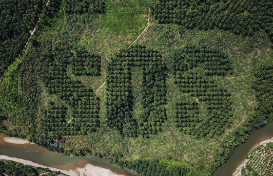 Environmental Artist Ernest Zacharevic Carves An Emergency Message Into A Sumatran Palm Plantation
