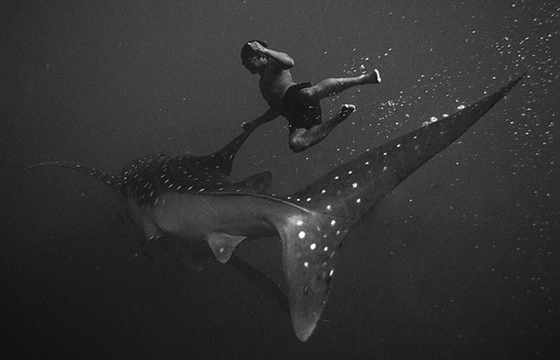 Underwater Photographs by Hengki Koentjoro