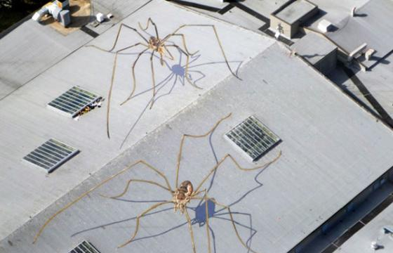 Massive roof spiders by Marlin Peterson