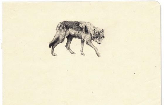 Amy Dover's Lone Wolf