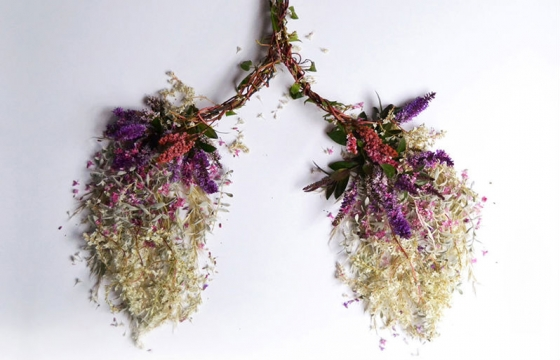 Eye Heart Spleen: Human Organs Made from Plants by Camila Carlow
