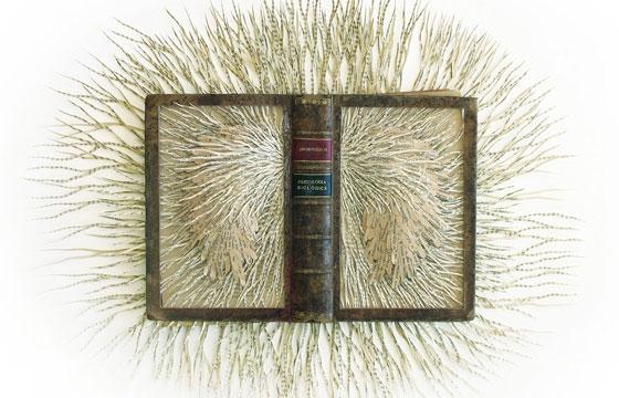 Barbara Wildenboer's Book Sculptures