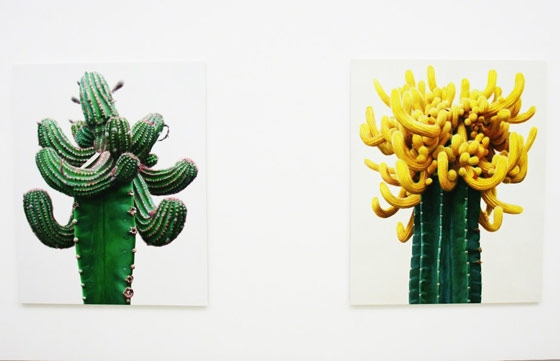 Lee Kwang-Ho's Paintings of Cacti