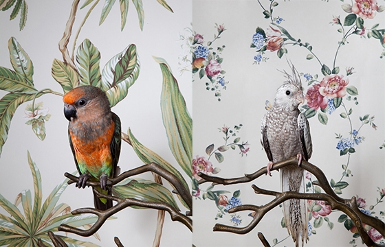 "Claire Rosen's ""Birds of a Feather"""