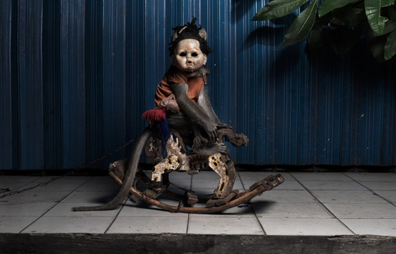 Creepy Photos of Monkeys Wearing Doll Masks
